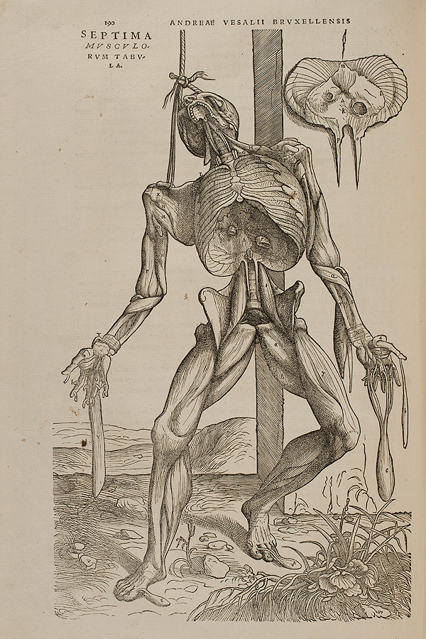 Truth and Myth | Vesalius