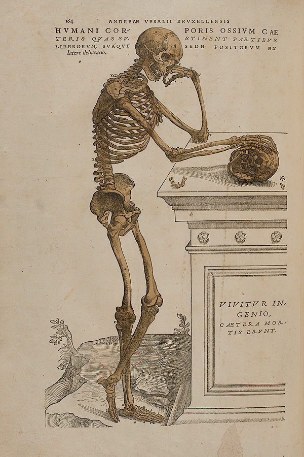 The Art of the Fabrica | Vesalius